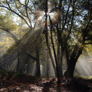 <b>光の森のティンカーベル</b>