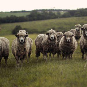 <b>目覚めよ、従順な羊たち</b>